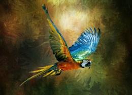 Dazzling Macaw