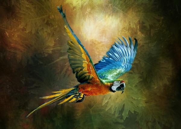 Dazzling Macaw by Tarrby