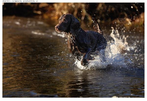 Dyson the Dog by GFJ