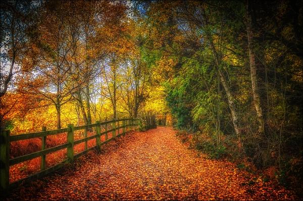 Autumn Walk by bigwheels