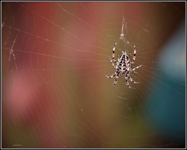 On a Web by bigwheels