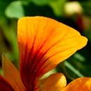 Hidden beauty of flower-petal.. by Manas