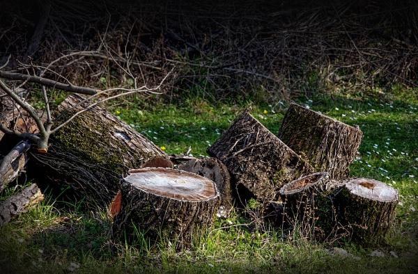 Stumps by nklakor