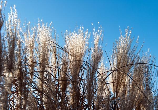 Grass and Sky by NevJB