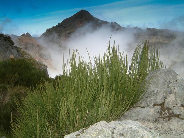 Morning mist by Photony