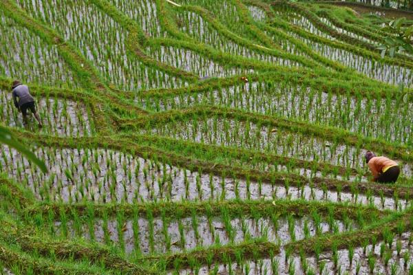 Farming by pptbudi