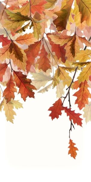 Oak Tree by Fionna