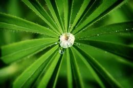drop of beauty