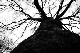 tree in time