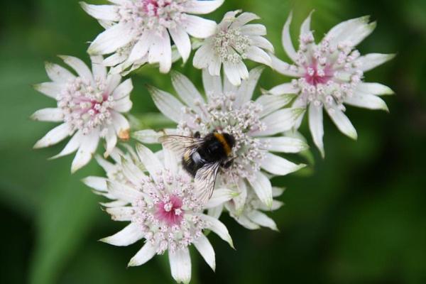 Bee Happy by caryslife