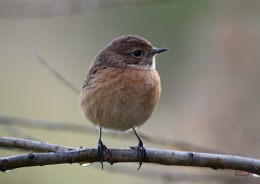 Young Stone Chat
