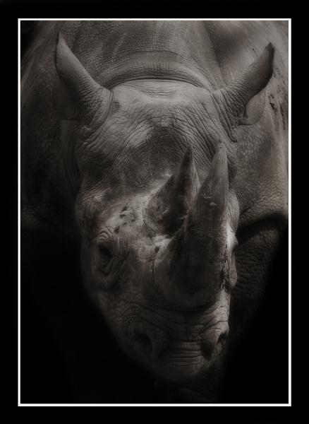 Rhino by JeremyCC