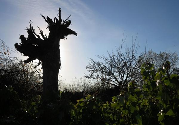 Bird or tree? by oldgreyheron