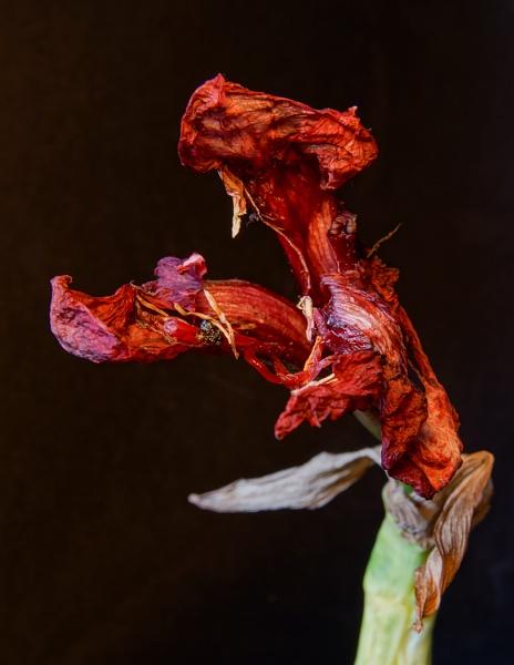 A Flowery Death by Otinkyad