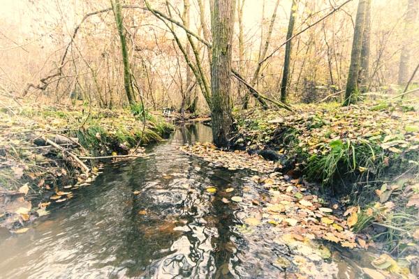 Forest stream by dawnstorr