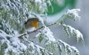 Happy Christmas To All On EPZ by hasslebladuk
