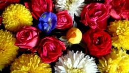 ' FLOATING FLOWERS '