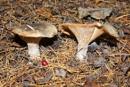 Fungi by Alan_Baseley