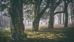 walk in the fog 6