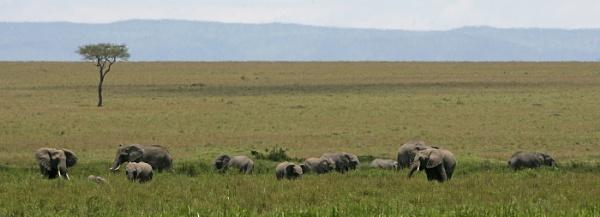 Kenyan landscape by philhomer