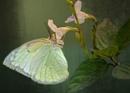 Soft Glow  by sweetpea62