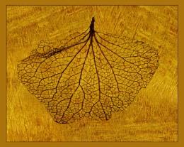Hydrangea Leaf Skeleton