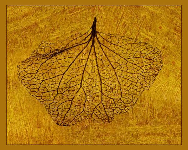 Hydrangea Leaf Skeleton by Irishkate