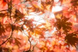 Autumn Sparkly