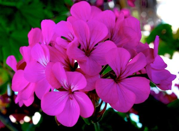 Flower power by ddolfelin
