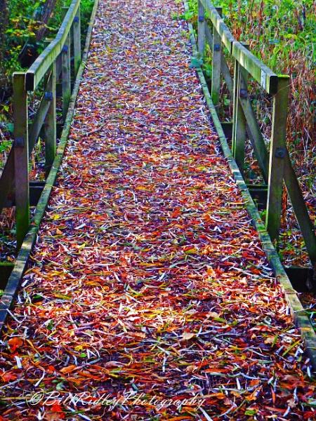 Autumn boardwalk by fastshoot