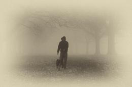 Foggy doggy
