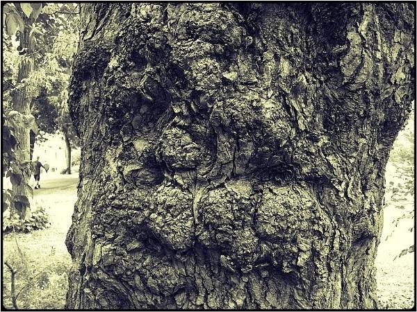 treescape face by FabioKeiner