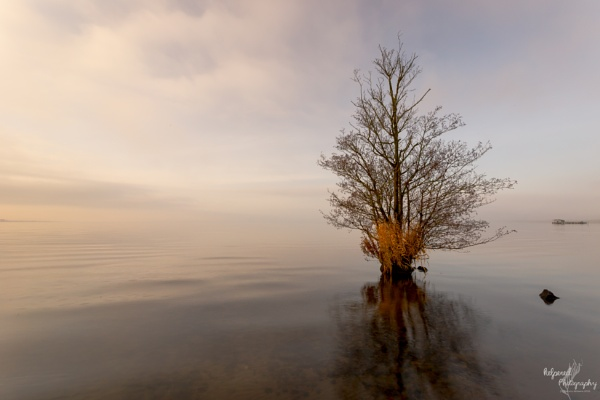 Stillness by PMWilliams