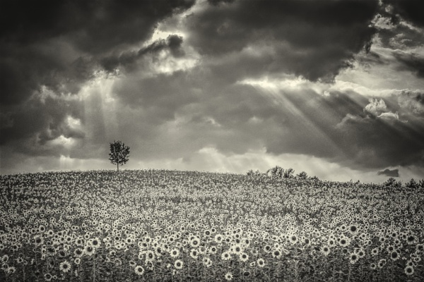 Field and Sky by gerainte1