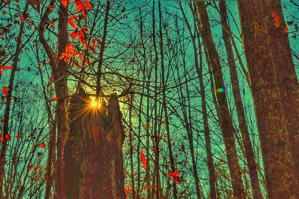 Sun rays by Signman