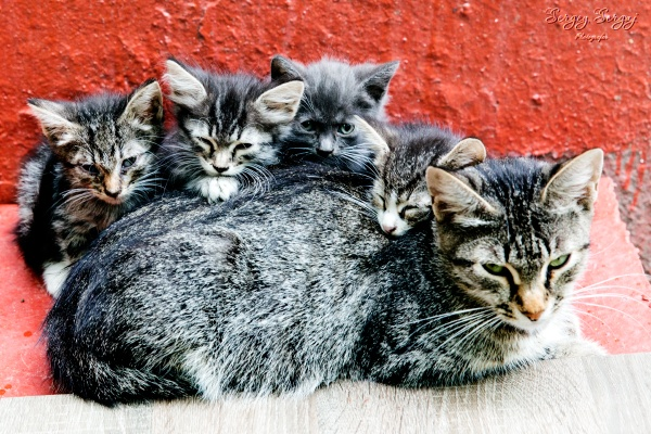 Cat family by sergeysergaj
