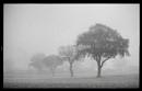 Tiptree Fog by antek76