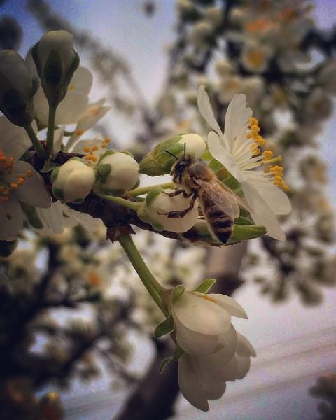 Bee Photo by Radak97