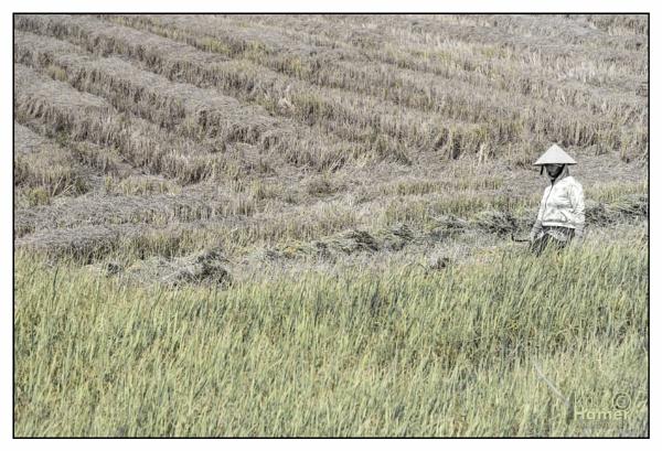 Vietnamese Farmer by IainHamer