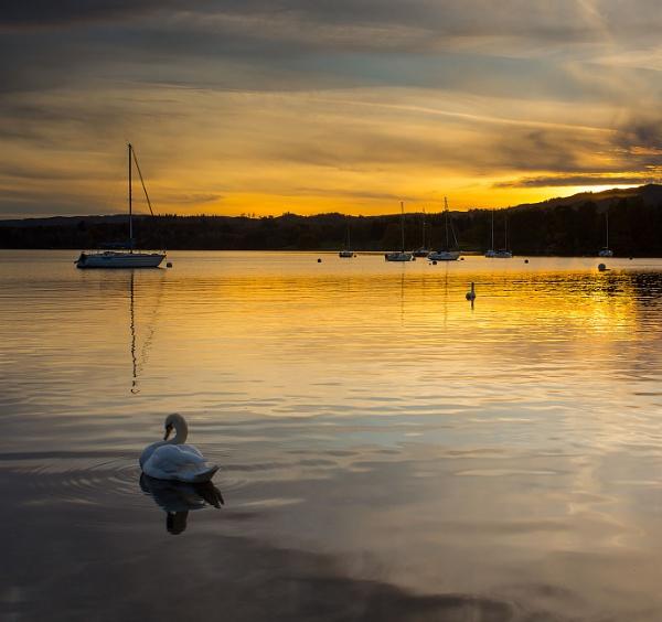 Swan Lake by martin.w