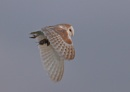 Linford Lakes Barn Owl and Kill by NeilSchofield