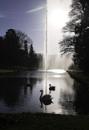 Swan Lake by SandraKay