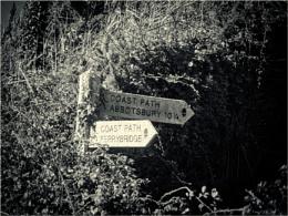 Dorset Life 20