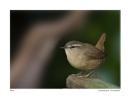 Wildlife by craggwildlifephotography