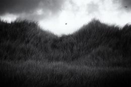 Gulls over dunes