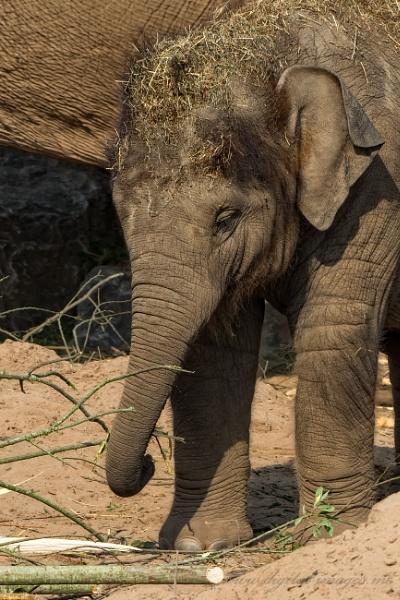 Elephant Calf by Alan_Baseley