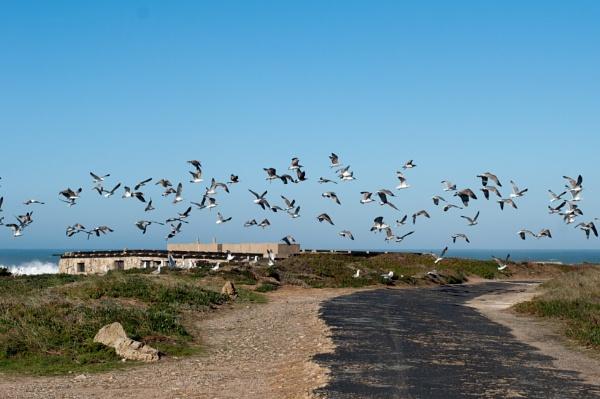 Feed the birds by HarrietH