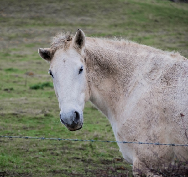 Old grey mare by cats_123