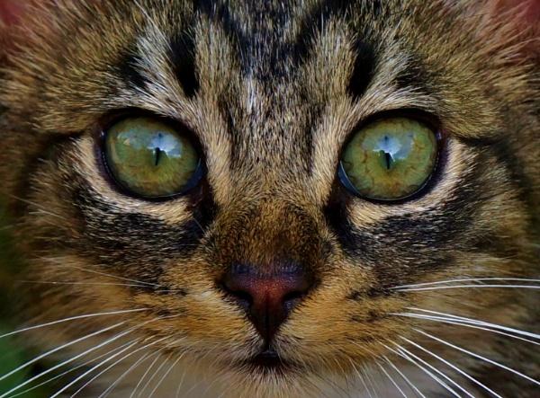 Green eyes. by georgiepoolie