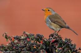 A Bird On The Bush..........